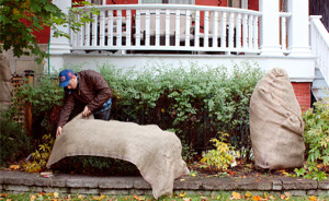 Quick Tips for Winterizing Your Garden