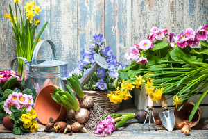 Quick Tips: Starting a New Garden Project